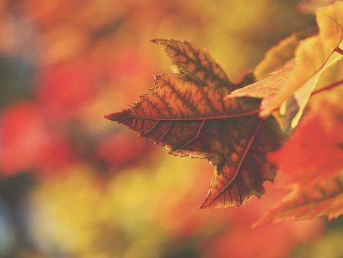 Leaf-Go-Meriwether-16