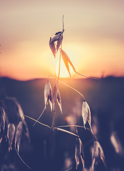 sun setting behind dying plant as a metaphor for divorce at mid-life